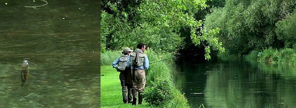 River Test Chalkstream Trout Fishing 2016 – Timsbury