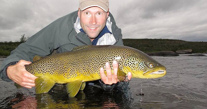 Wild brown trout from Kola