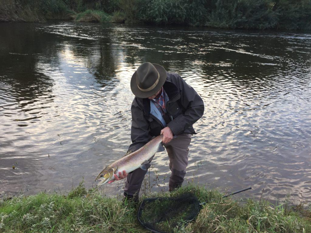 Letton Court Salmon