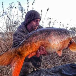 Swanborough Lakes Carp