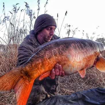 Swanborough Carp Fishing Lakes